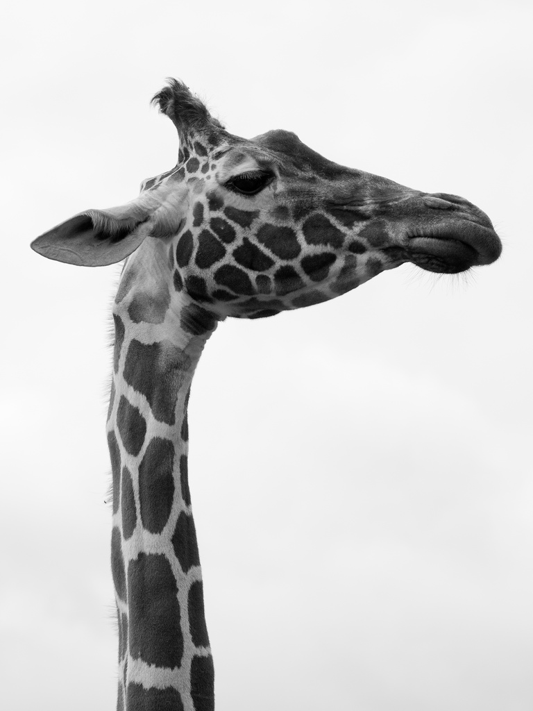 Giraffe seeing what's going on in PR SEO content marketing.